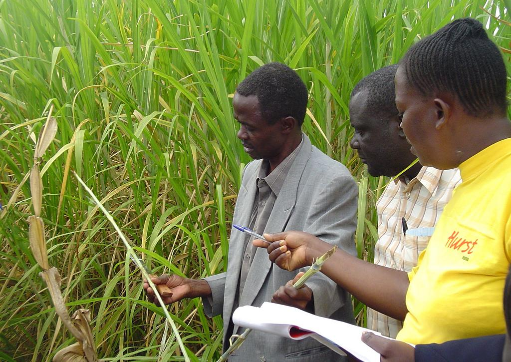 Identify pests and deseases on crops