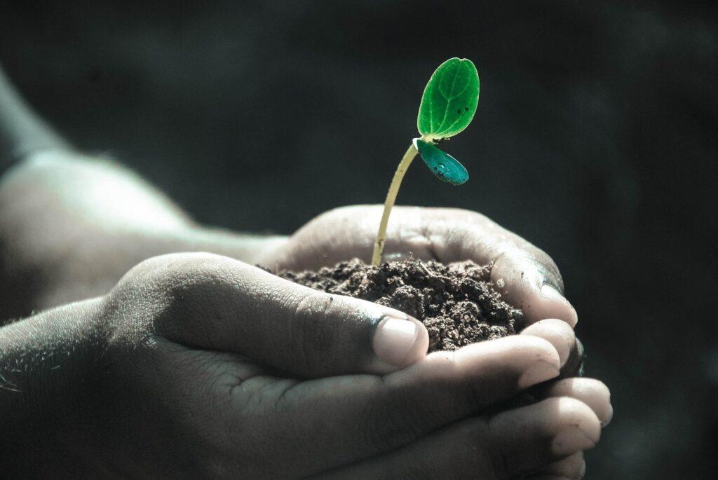 Manipulate Plants
